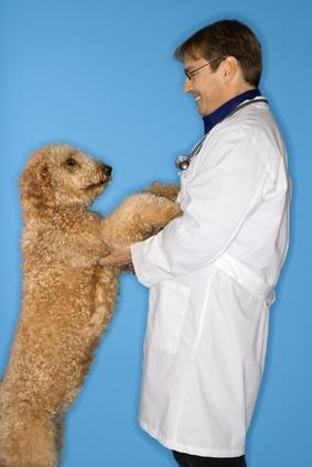 Ausbildungsberuf tierarzthelfer tierarzthelferin